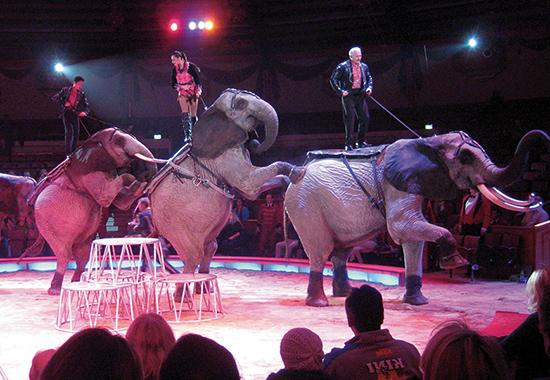 """Elefanten zeigen """"Kunststücke"""" im Zirkus."""
