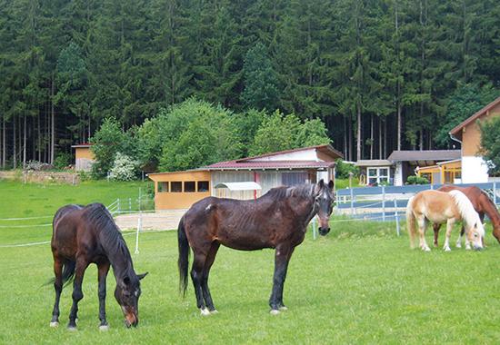 Bei jungen Pferden entspricht ein Lebensjahr ungefähr dreieinhalb Jahren in einem Menschenleben. Mit zunehmendem Alter ändert sich aber der Umrechnungsfaktor. Bei älteren Pferden entspricht ein Jahr dann ungefähr drei Menschenjahren. Ein 20 Jahre altes Pferd ist also mit einem 60-jährigen Menschen zu vergleichen.