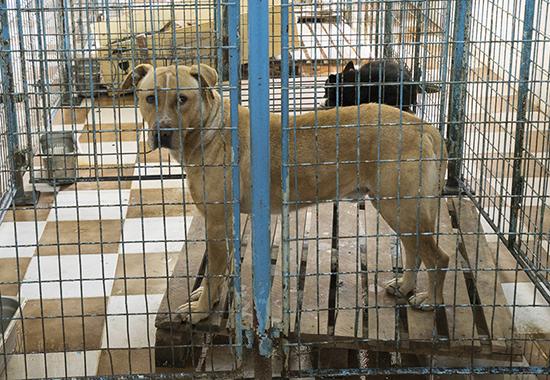 Auch im städtischen Tierheim warten viele Hunde auf ein neues Zuhause.