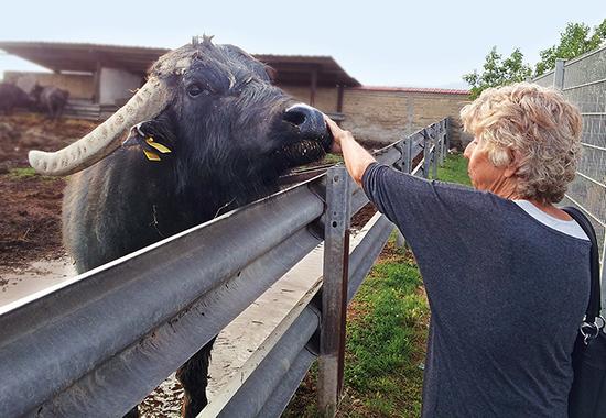 Dorothea Friz hat einer Büffelherde ein neues Zuhause gegeben.