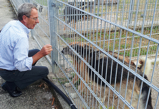 Ehrenpräsident Wolfgang Apel auf Tuchfühlung mit einem Hund im Außenzwinger.