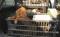 HANDOUT - Die Verkehrspolizei Schweinfurt-Werneck (Bayern) hat am 13.07.2013 auf der A70 ein Auto aus dem Verkehr gezogen, dessen Fahrer insgesamt 78 Hundewelpen verschiedener Rassen im Kofferraum hatte. Der illegale Tiertransport wurde gestoppt und die Tiere nach Polizeiangaben ans Tierheim ¸bergeben. Foto: Polizeipr‰sidium Unterfranken (zu dpa-lby vom 13.07.2013) (ACHTUNG: Honorarfrei - Nur zur redaktionellen Verwendung im Zusammenhang mit der aktuellen†Berichterstattung und mit vollst‰ndiger Nennung der Quelle)