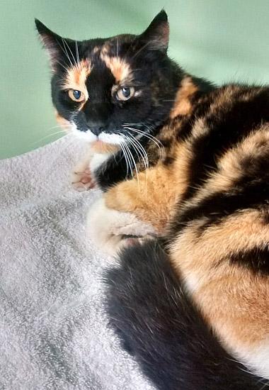 Dank des Deutschen Haustierregisters ist Miezi zurück bei ihrer Besitzerin.