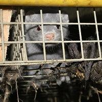 Foto: Oikeutta eläimille