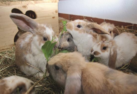 Gerettet aus einem Animal-Hoarding-Fall: Der Tierschutzverein Leverkusen päppelt die Kaninchen für die Weitervermittlung wieder auf.