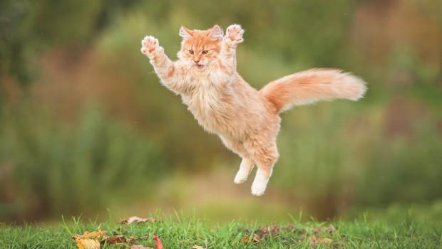 Eine Katze springt in die Luft