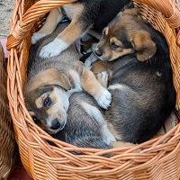 Hundemarkt in Slubice