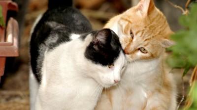 Katzen kommunizieren im Freigang