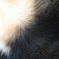 hundefell_news