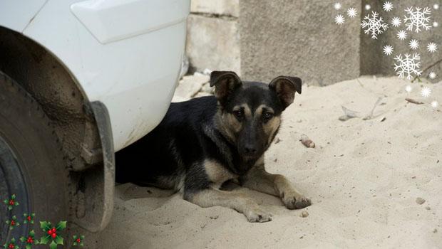 Ein Straßenhund in Kiew.