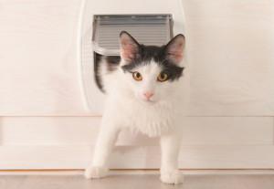 Katzenklappen ermöglichen Mensch und Tier mehr Flexibilität.