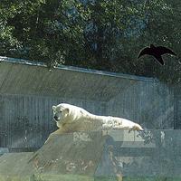 Ein Eisbär in einem Zoo.