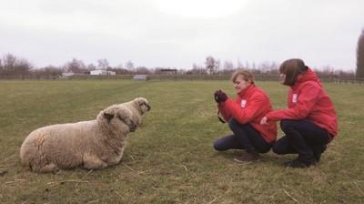 (c): Deutscher Tierschutzbund