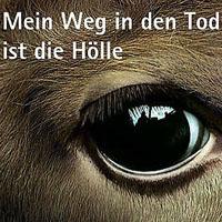 "Motiv der Kampagne ""Stoppt qualvolle Tiertransporte"""