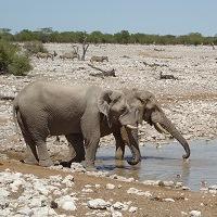 Elefanten_trophaeenjagd_news0316