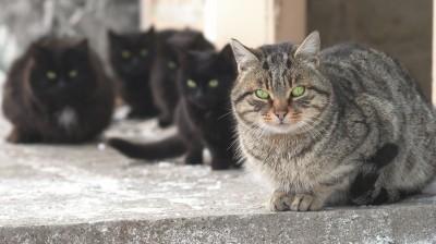 Eine Gruppe frei lebender Katzen