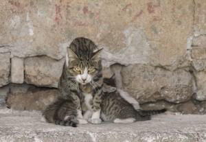 Katzenmutter mit ihren Welpen