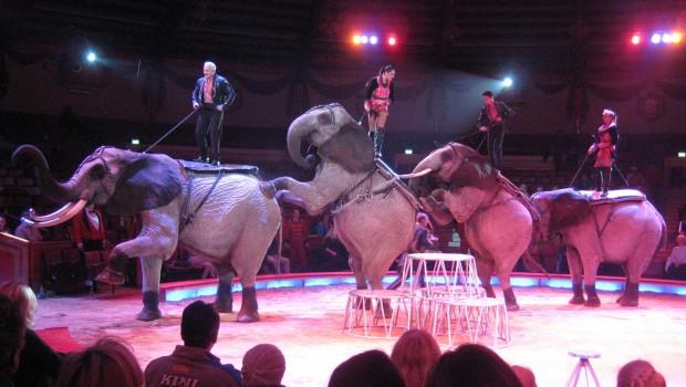 Elefanten treten im Zirkus Krone auf.