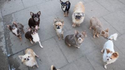 Der Hamburger Tierschutzverein von 1841 hat auf einen Schlag 46 Hunde aus einem Animal Hoarding-Fall aufgenommen.