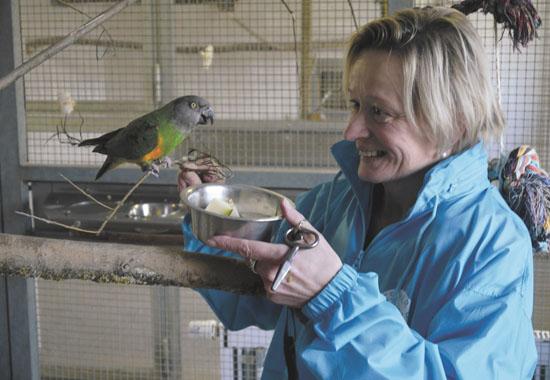 Katrin Umlauf, Leiterin des Tierschutzzentrums Weidefeld, füttert einen Papagei in einer Voliere.
