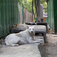 Straßenhund.