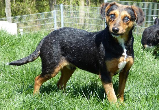 Das Tierheim Reutlingen kümmert sich um diesen und 34 weitere Hunde aus dem Animal Hoarding Fall.