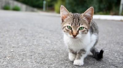 Diese Katze auf der Straße steht symbolisch für zwei Millionen freilebende Katzen in Deutschland.