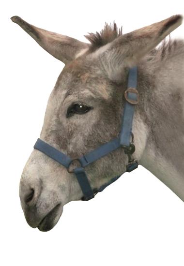 Die Noteselhilfe hat sich nicht nur Esel Reni, sondern in den vergangenen zehn Jahren 300 Eseln und Mulis angenommen.