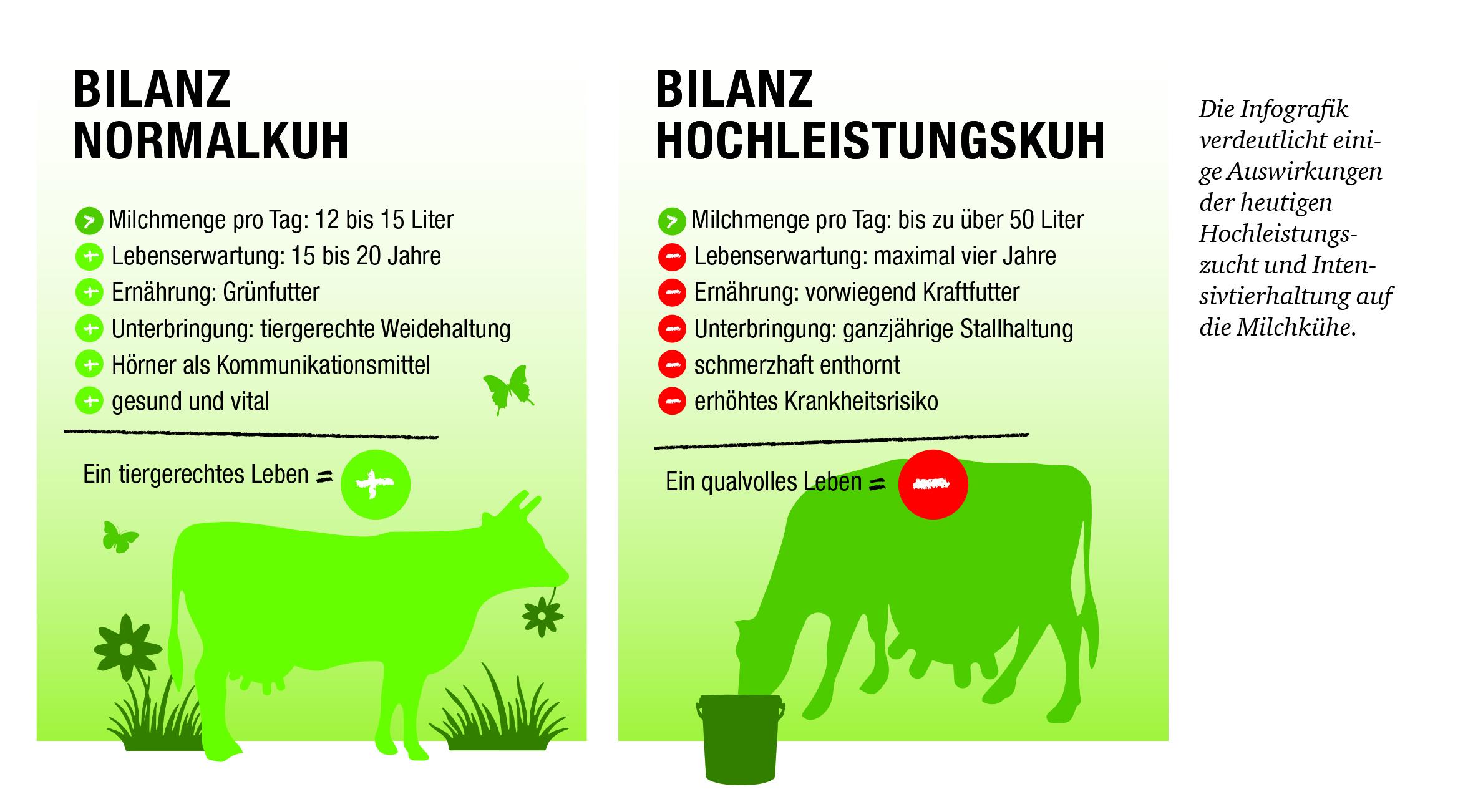 Die Infografik verdeutlicht einige Auswirkungen der heutigen Hochleistungszucht und Intensivtierhaltung auf die Milchkühe.