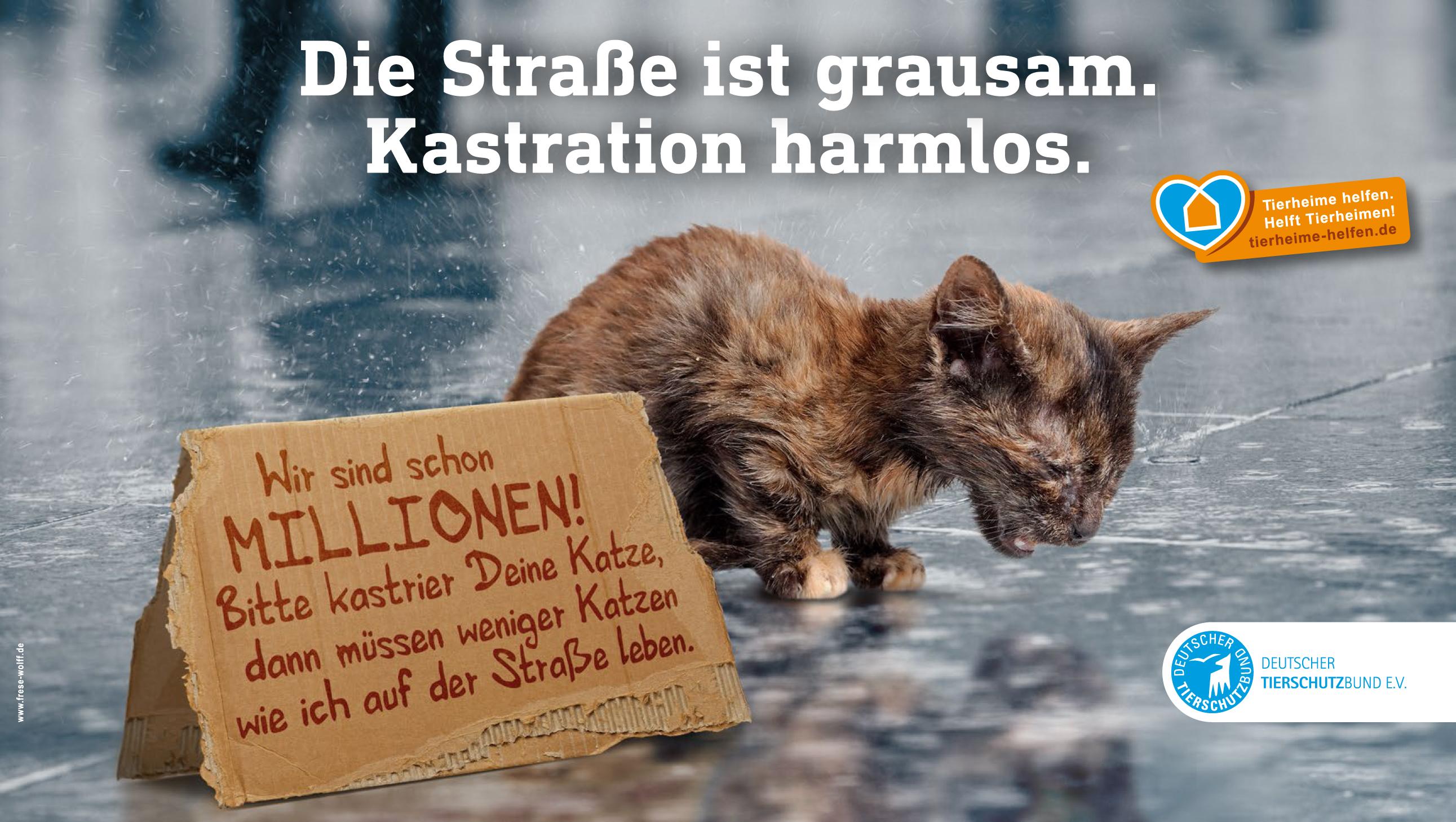 Motiv der Katzenschutz-Kampagne: Die Straße ist grausam. Kastration harmlos.