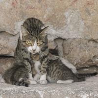 Katzenmutter mit ihren Welpen.