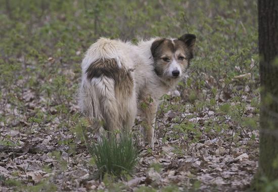 Ein verwahrloster Straßenhund außerhalb des Stadtzentrums.