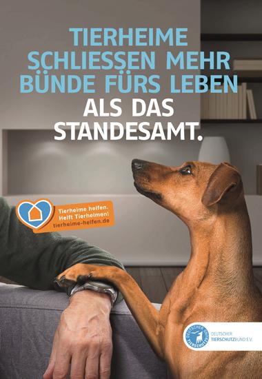 """Motiv der aktuellen Kampagne """"Tierheime helfen. Helft Tierheimen!"""" des Deutschen Tierschutzbundes."""