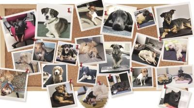 Diese Hunde begleiten die Mitarbeiter des Deutschen Tierschutzbundes jeden Tag ins Büro.