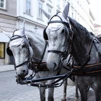 Pferdefiaker in Wien.