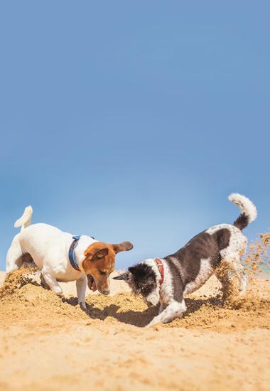 Die meisten Hunde lieben es, gemeinsam um die Wette zu graben.