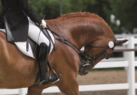 In dieser Zwangshaltung, auch Rollkur genannt, erleidet das Pferd körperliche und seelische Schmerzen.