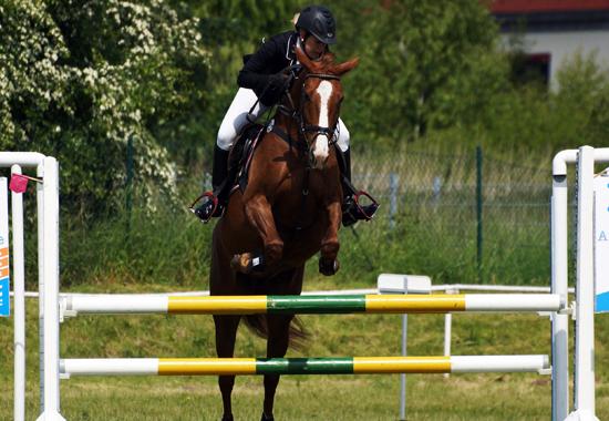 Ein Reiter springt mit seinem Pferd einen Parcours auf einem Turnier.