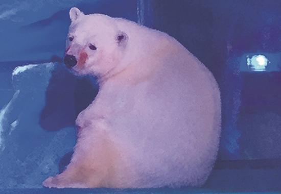 Dieser Eisbär dient Touristen als Fotomotiv in einem chinesischen Kaufhaus.