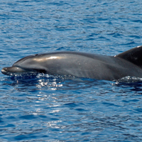 Symbolfoto: Delfin.