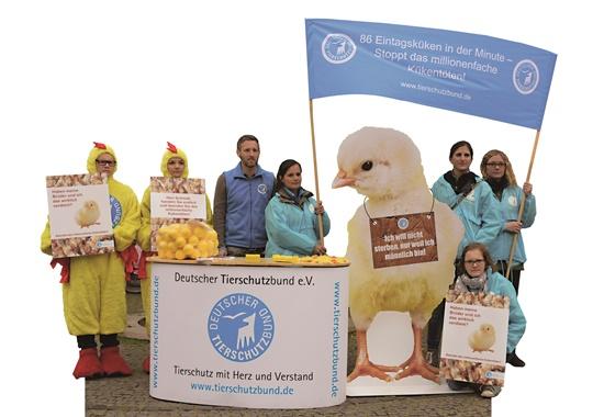 Der Deutsche Tierschutzbun hat mit einer Aktion vor dem Oberverwaltungsgericht in Münster auf die tierschutzwidrige Praxis der Kükentötung aufmerksam gemacht.