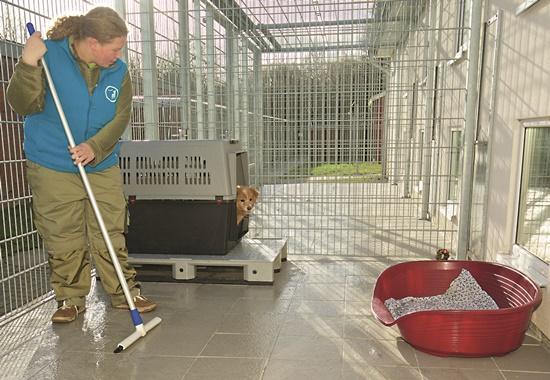 Das Reinigen der Gehege und das Versorgen der Tiere steht im Mittelpunkt der Tierheimarbeit.