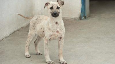Dieser Hund befindet sich im Tierschutz- und Kastrationszentrum Odessa in der Obhut der Mitarbeiter.