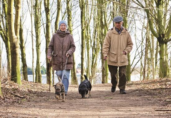 Ehrenamtliche gehen mit Hunden aus dem Tierheim spazieren. Sie sind eine wichtige Untetrstützung im Alltag.