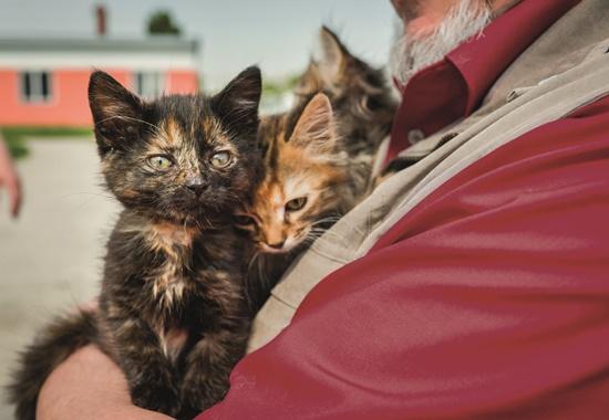 Katzenwelpen in der Obhut des Tierschutzzentrums in Odessa.