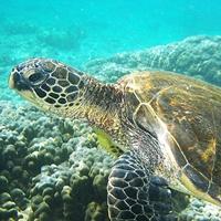 Symbolfoto: Meeresschildkröte.