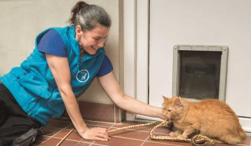 Kari Hansen, stellvertretende Leitung im Tierheim Leverkusen, spielt mit einer Katze.