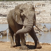 Symbolfoto: Elefant.