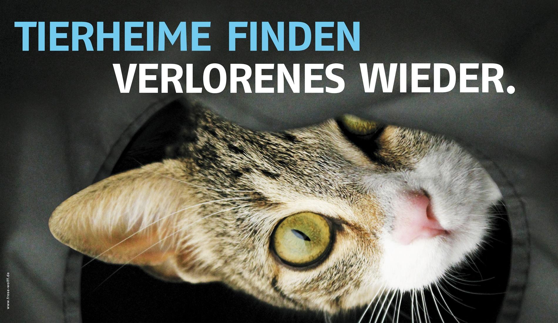 Website_dudt_Tierheime helfen_KatzeII_beitragsbild