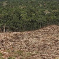Symbolfoto: Abholzung des Regenwaldes.
